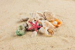 Seashells und rozgwiazda na piasek plaży pocztówce Zdjęcia Stock