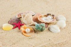 Seashells und rozgwiazda na piasek plaży pocztówce Obrazy Royalty Free