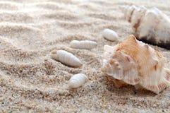 Seashells und Sand stockbild