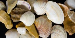 Seashells und Seesteine Lizenzfreie Stockbilder