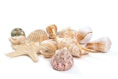 Seashells und Starfish Lizenzfreies Stockfoto