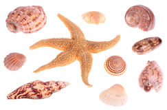 Seashells und Starfish Stockfotos