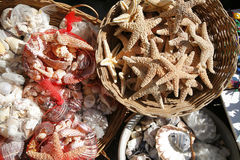 Seashells und Starfish Stockfoto