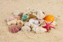 Seashells und starfish on sand Stock Image