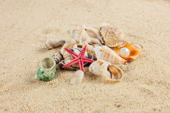 Seashells und starfish on sand beach postcard Stock Photos
