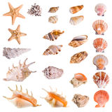 Seashells und Starfishansammlung Stockfotos