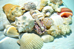 Seashells under water. Royalty Free Stock Photos