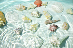Seashells under water. Stock Images