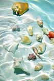 Seashells under water. Royalty Free Stock Photo