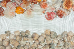 Seashells under water Royalty Free Stock Photography