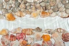 Seashells under water Royalty Free Stock Image