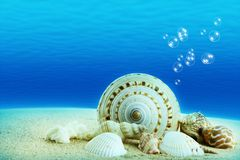 Seashells with underwater background. Royalty Free Stock Photography