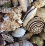 Seashells. Up close of a collection of seashells royalty free stock image