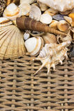 Seashells  in the upper side of old wicker baket. Vertically. Royalty Free Stock Photography