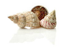 Seashells Royalty Free Stock Photo