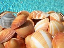 Seashells variopinti Fotografia Stock Libera da Diritti