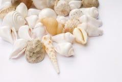 Seashells variopinti Fotografie Stock