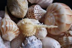 Seashells variopinti fotografia stock