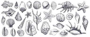 Seashells vector комплект вычерченные иллюстрации руки Стоковая Фотография
