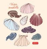 Seashells vector комплект Собрание различных изолированных раковин Стоковые Изображения