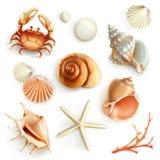 Seashells vector icons. Set with seashells, vector icons royalty free illustration