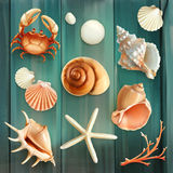 Seashells vector icons Royalty Free Stock Photography