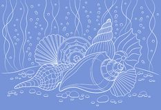 Seashells. Vector illustration with seashells can be used for graphic design, textile design or web design Royalty Free Stock Photo