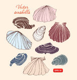 Seashells vector set. Collection of different isolated shells. Stock Images