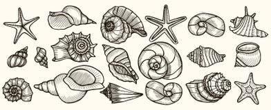 Seashells vector set. Stock Image