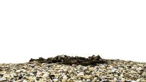 Seashells w naturze odizolowywającym z białym tłem Zdjęcie Stock