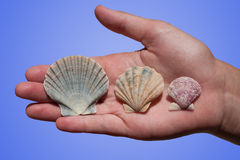 Seashells w ręce Fotografia Royalty Free