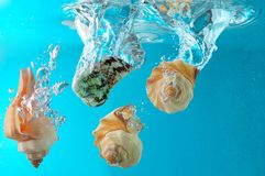 Seashells in water. Four seashells falling into clear water. Blue background Royalty Free Stock Photography