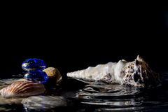 Seashells in water with reflection and with the falling drops isolated on a black background Stock Photo