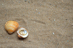 Seashells and wedding rings on the sand. Two seashells and two wedding rings on a background of sand on an ocean beach Royalty Free Stock Photos