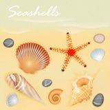 Seashells Wektorowi Zdjęcia Royalty Free