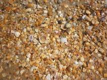 Seashells on wet sand beach at hot sun summer day. Royalty Free Stock Photos