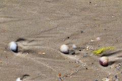 Seashells on wet sand beach at summer Stock Images