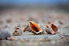 Seashells on wet sand Royalty Free Stock Image
