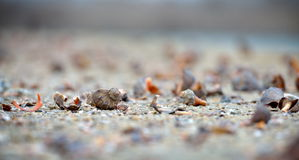 Seashells on wet sand Stock Images