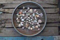 Seashells in Wheel on Wood Planks Royalty Free Stock Image