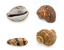 Seashells on white background. Collections of seashells on white background stock image