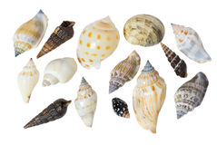 Seashells on a white background. The group of seashells on a white background. View from the top Stock Image