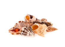Seashells on a white background Royalty Free Stock Photos