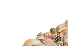Seashells on white background Royalty Free Stock Image