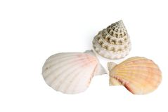 Seashells on white background Royalty Free Stock Photography