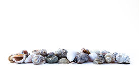 Seashells on the white. Background stock image