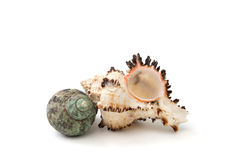 Seashells on a white background isolated Royalty Free Stock Photos