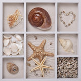 Seashells in a white box Stock Photos