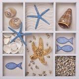 Seashells in a white box royalty free stock photo