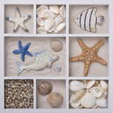 Seashells in a white box stock photo